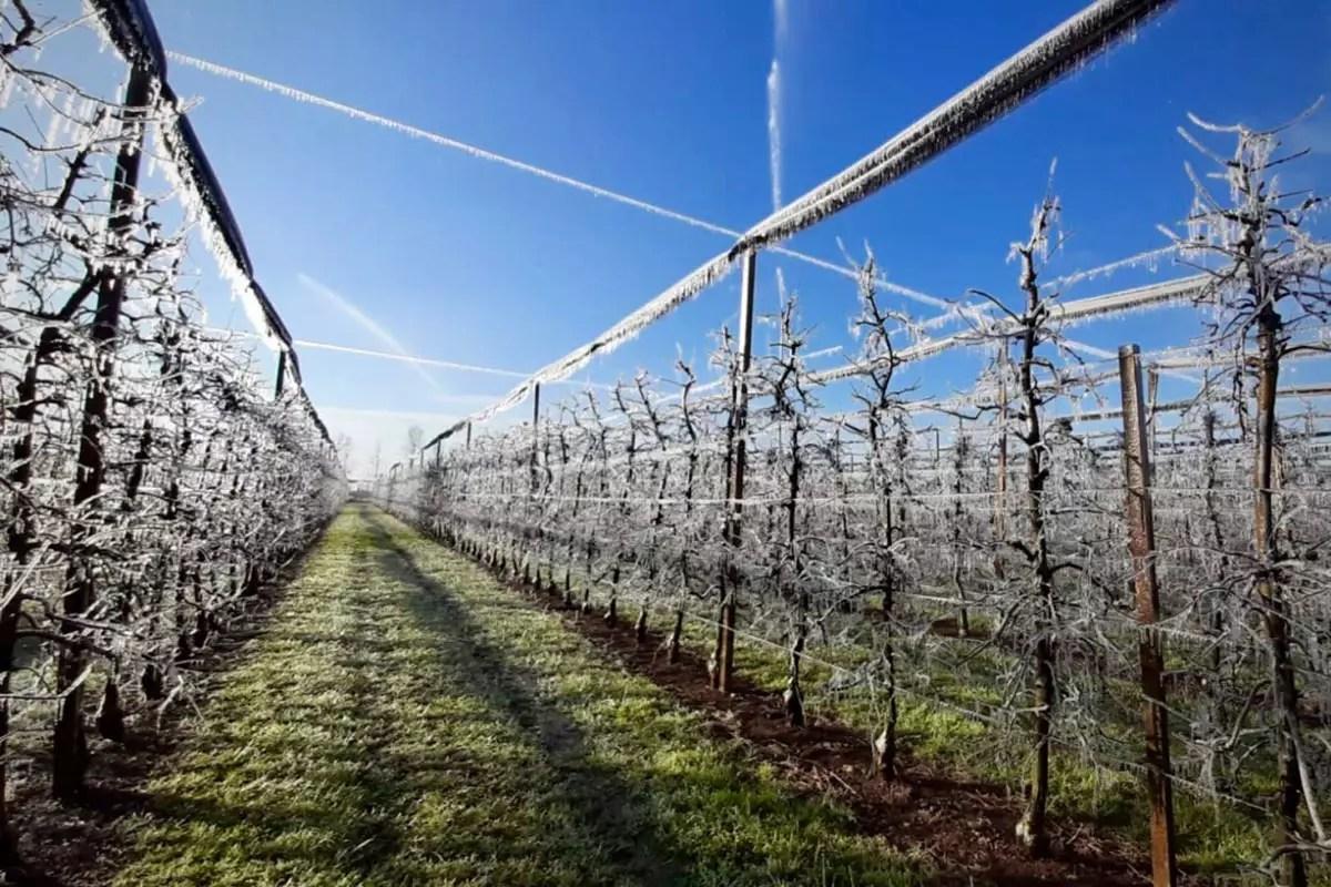 Gelata-Friuli-meli-Pomis-2020-03-24
