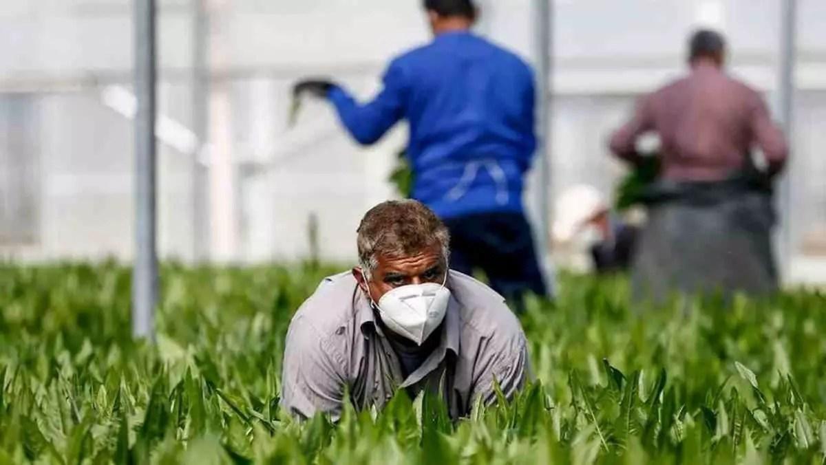 Coronavirus: 170 braccianti positivi in grande azienda agricola, 500 in quarantena