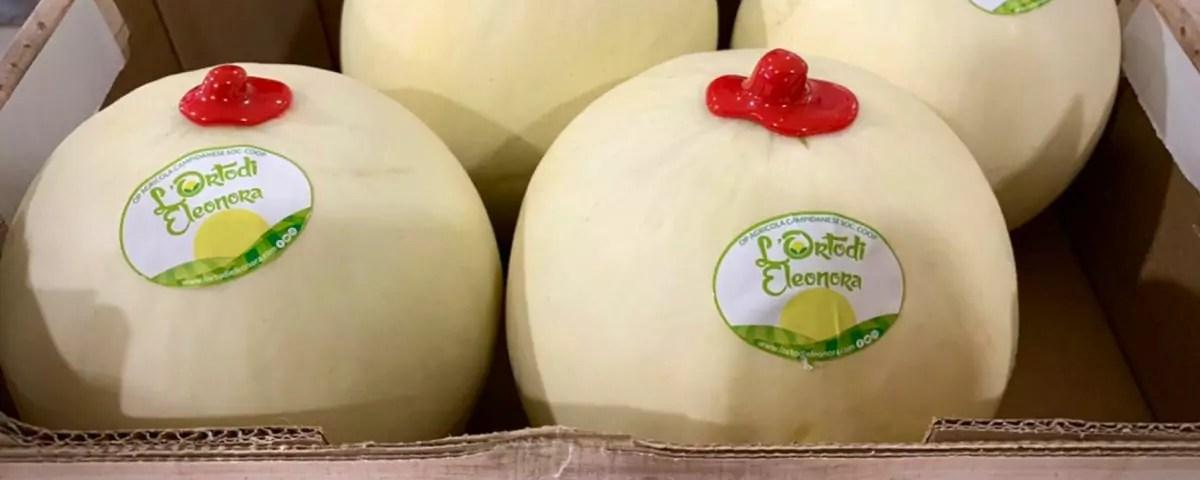 Melone-liscio-orto-eleonora-campidanese