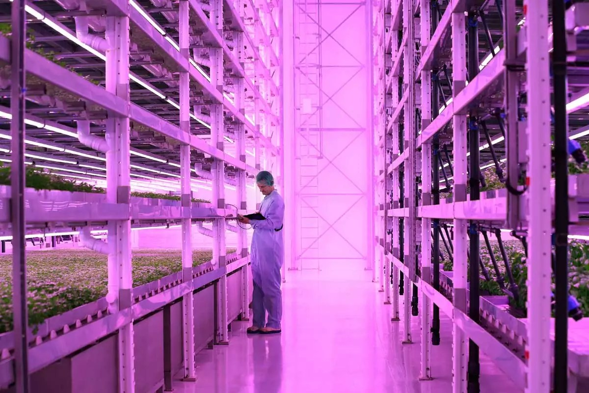 Ocado vertical farm