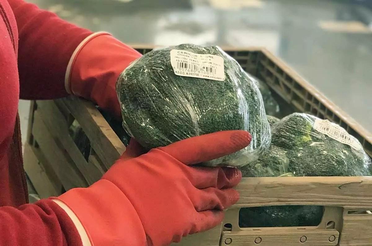 Cericola broccolo