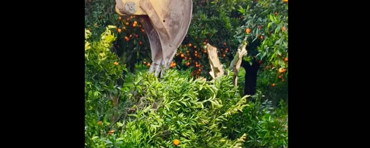 Clementine-Calabria-escavatore-Varamo