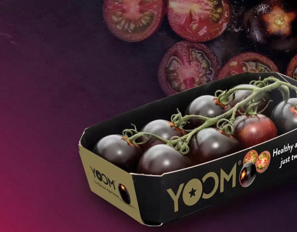 Yoom-romato-pomodoro-Gandini-Syngenta
