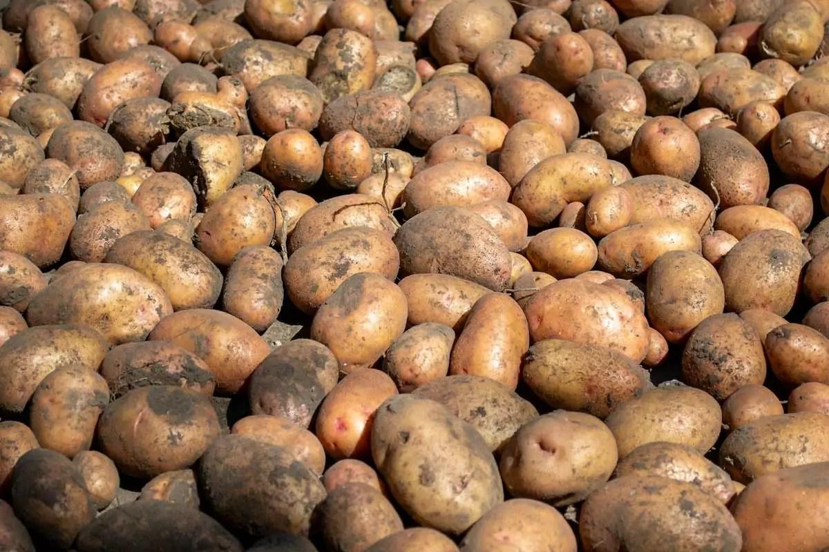 Tesco patate