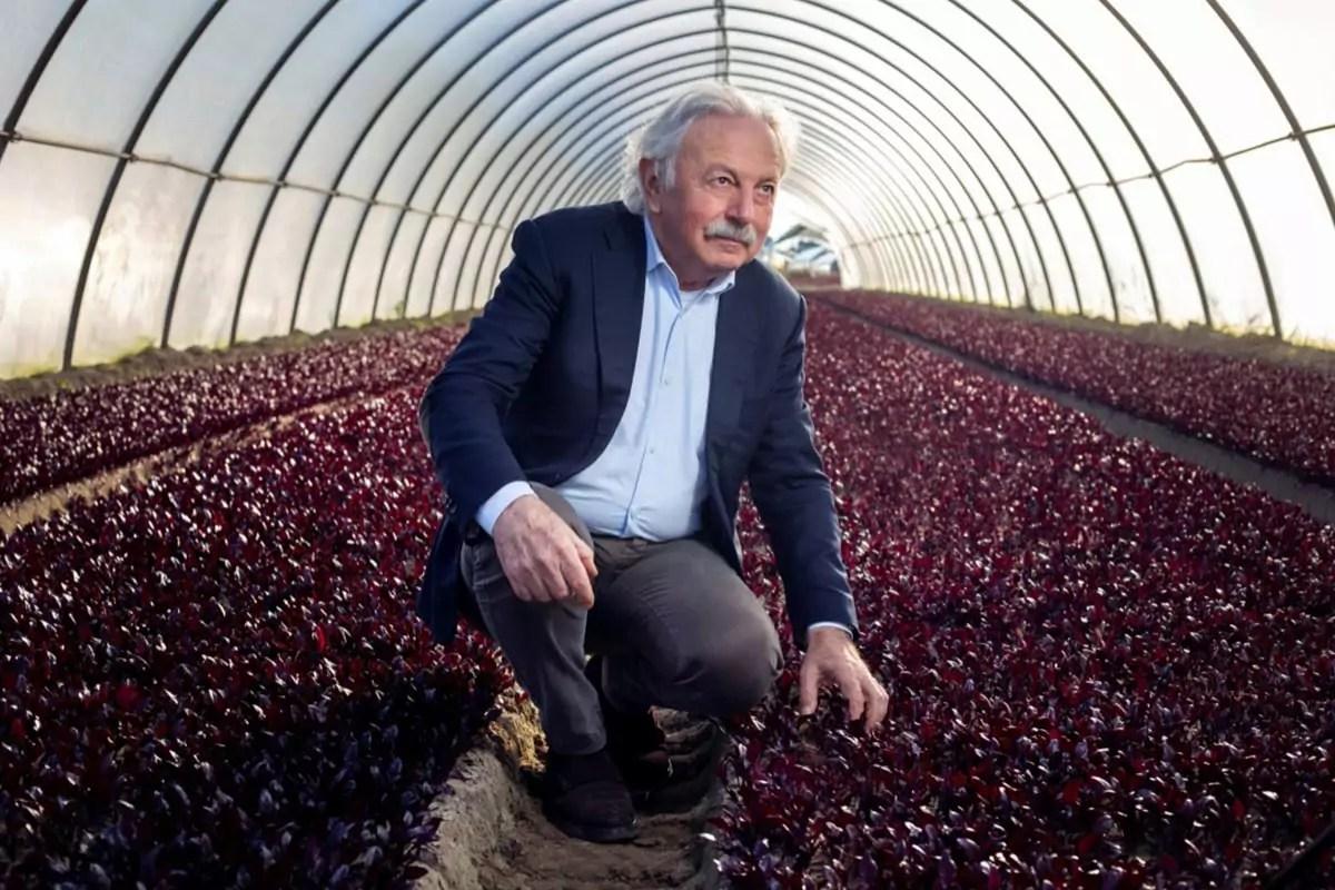 Cultiva-Giancarlo-Boscolo-insalate