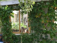 artur potting shed window