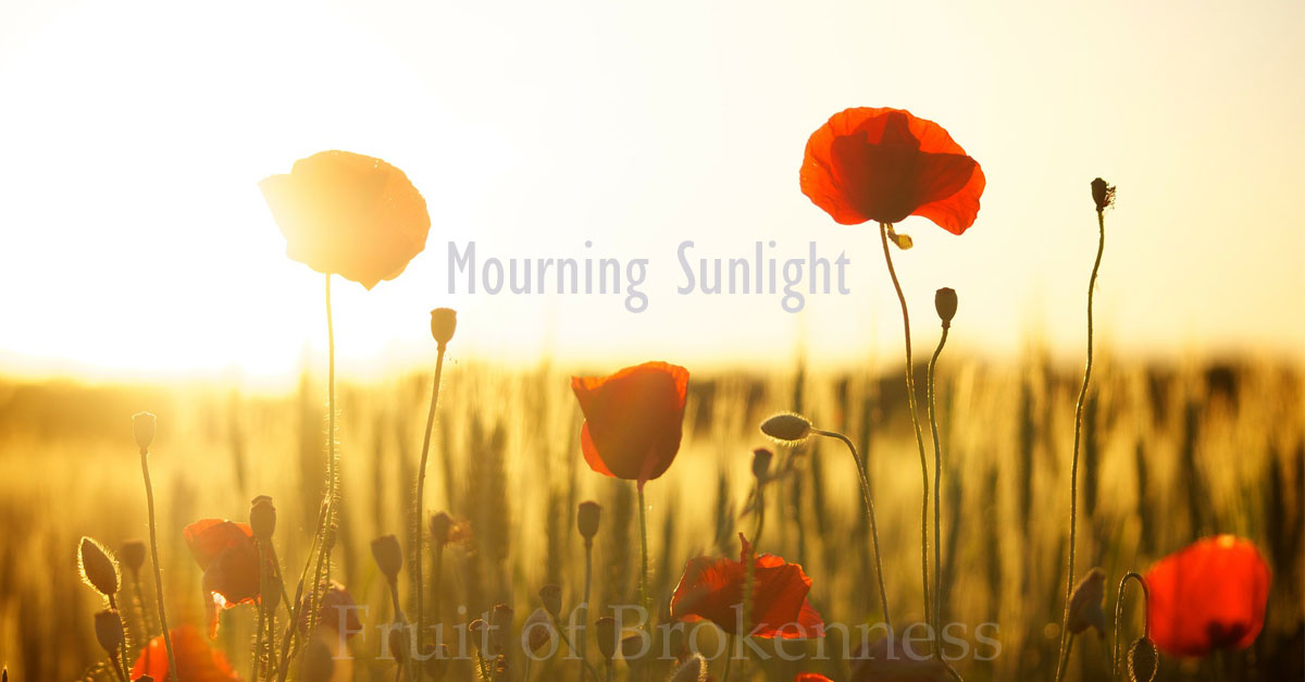 Mourning Sunlight