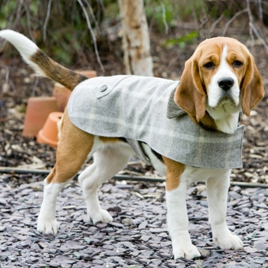 Tweed Dog Coat (Image: cuckooland.com)