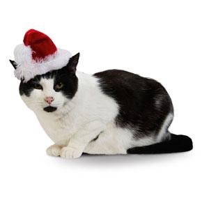 cat santa hat