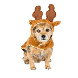 reindeer hoodie dog