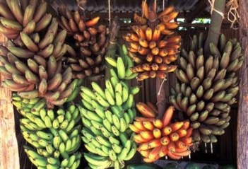 Photo Marco Moretti Bananas: different kind