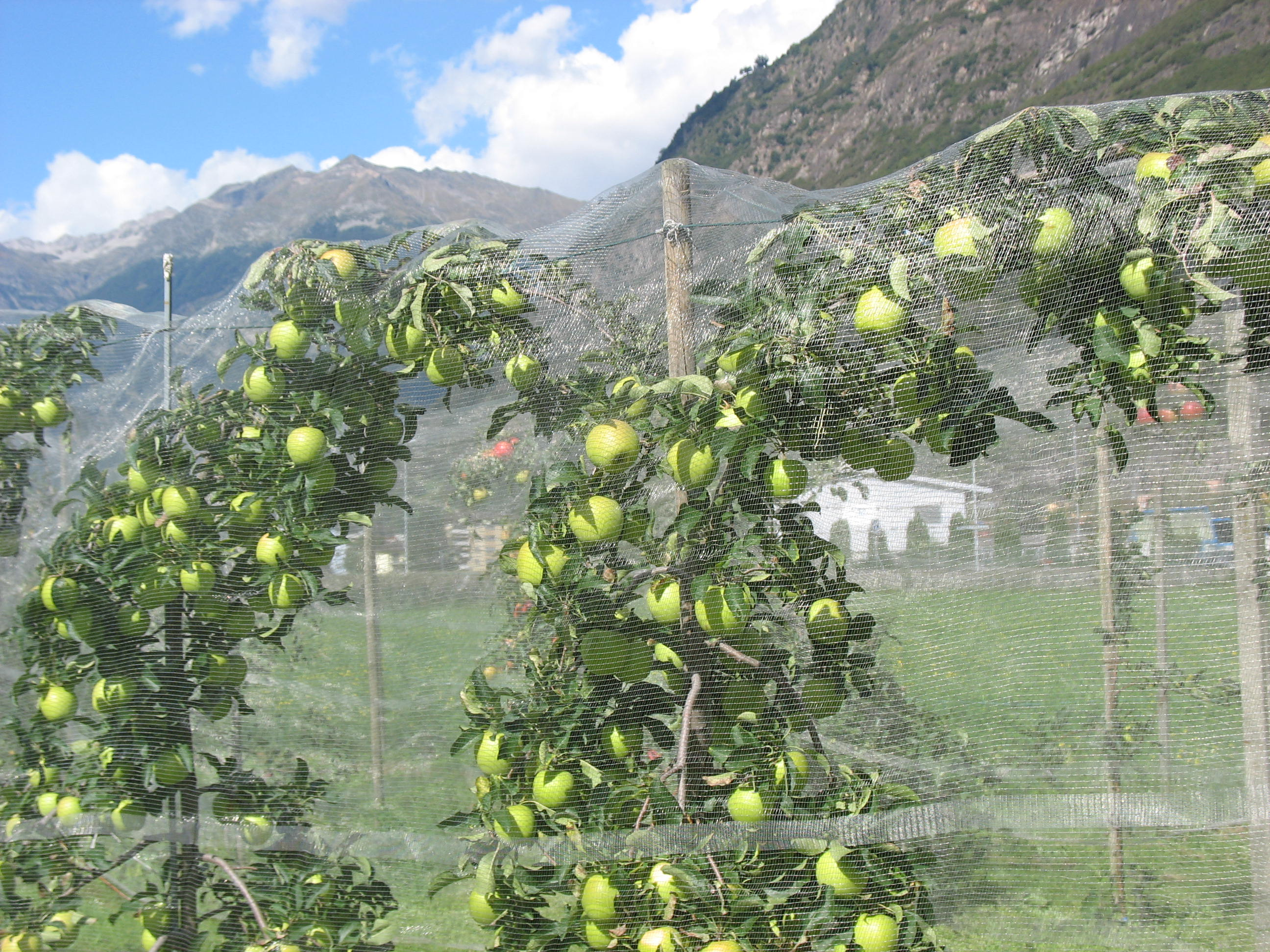 AFT  Associazione Frutticoltori Ticinesi  Informazioni
