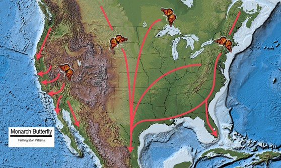 Monarch butterfly migration pattern