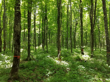 Shifting from high frequency management with low tree retention to low frequency management with high retention can sequester up to 57% more carbon. Forest Products Laboratory Usda Forest Service