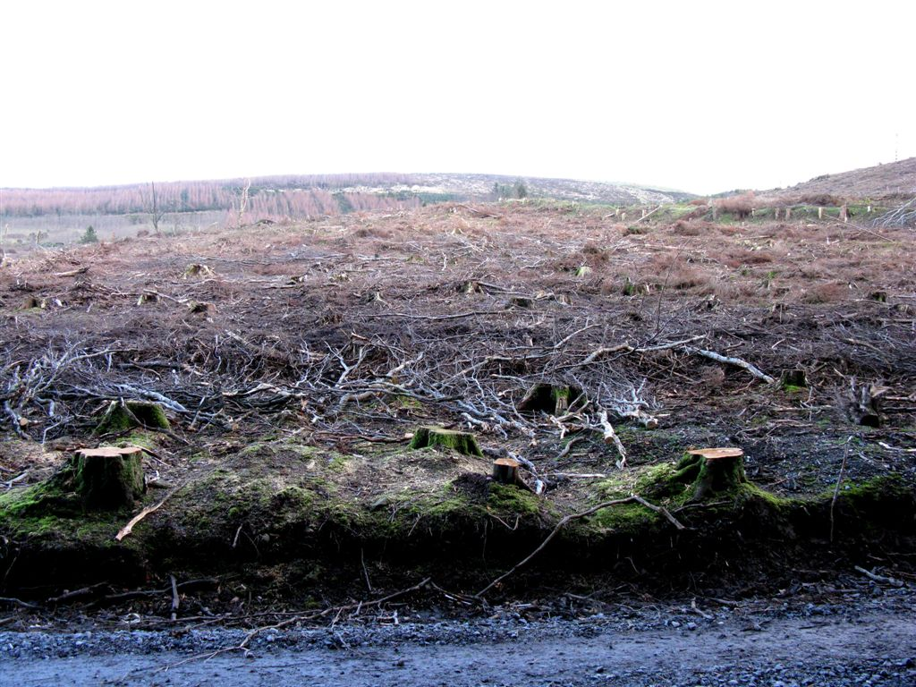 Clearcut_at_Clonmel_IMG_1028.JPG