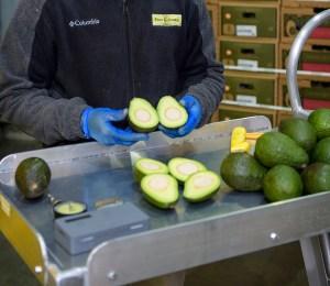 Fresh cut avocado