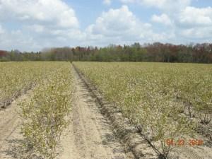 trees planted on farm