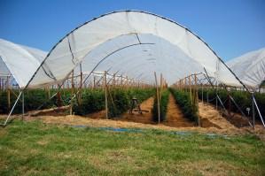 Farm with fresh crops growing