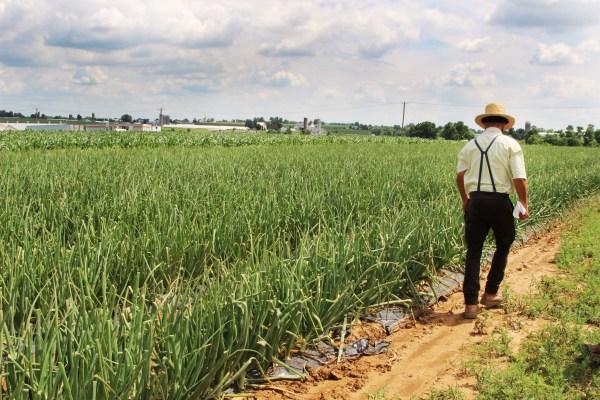 farmer at farm