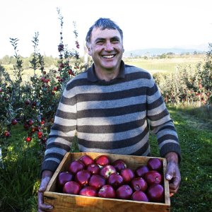 Man holding apples in boxes