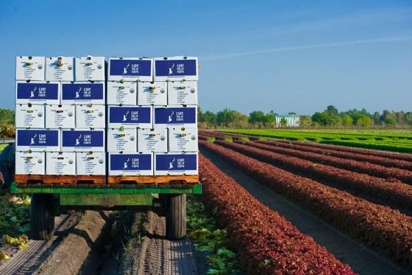 Fresh fruit in boxes in field