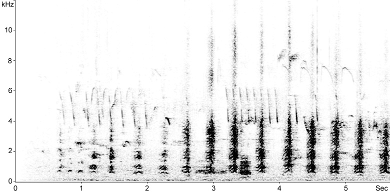 Great Crested Grebe (Podiceps cristatus) Sonogram > Fraser