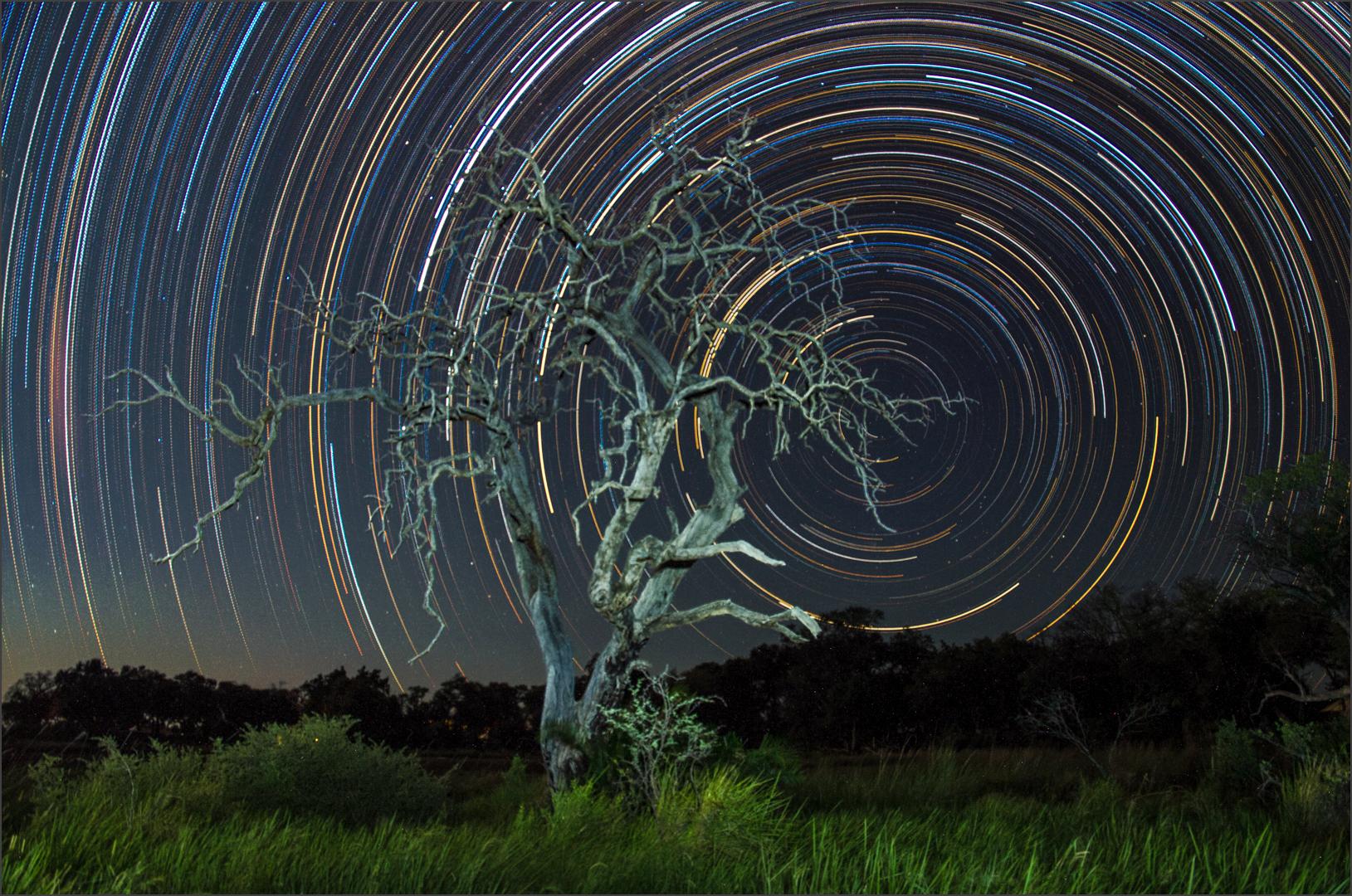 Rickus Barnard - The World Behind The Tree - COM, Best of Theme