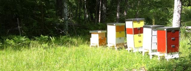 Mina bin verkar inte trivas. Eller så trivs de så bra att förökning är deras främsta prioritet.