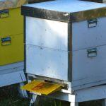 Starkt samhälle med trevliga bin.