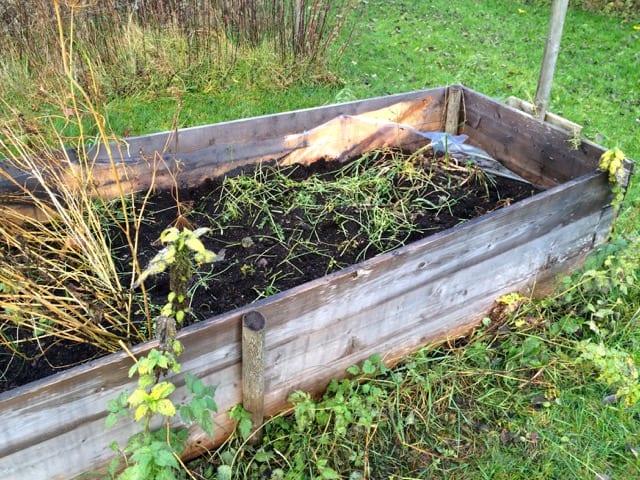 För ett par dagar sedan stod morötterna tätt här i djupbädden. Nu är jorden genomletad och det finns bara några förkrympta morötter och blast kvar.