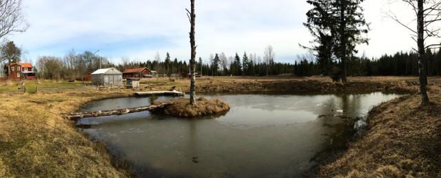 Det är nu slutet av mars och dammen är snart helt isfri. Dagens blåst har brutit upp de sista flaken och vårfloden i diket har fyllt upp dammen till högsta vattennivå.
