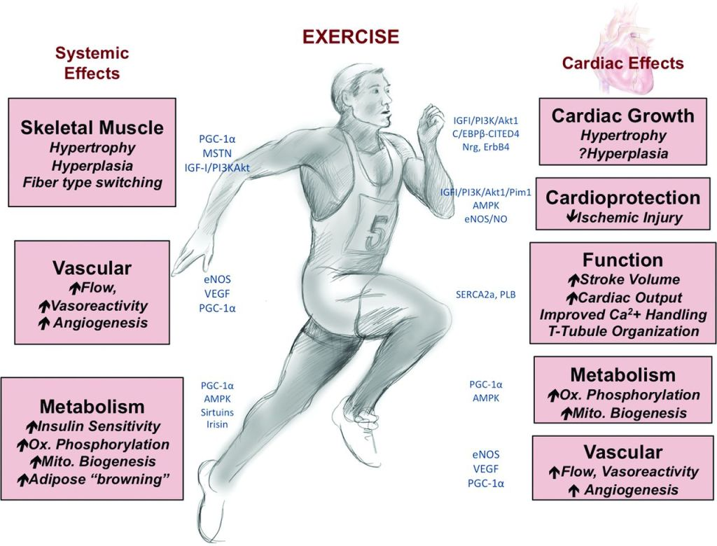 Learn how exercise can prevent coronary heart disease.