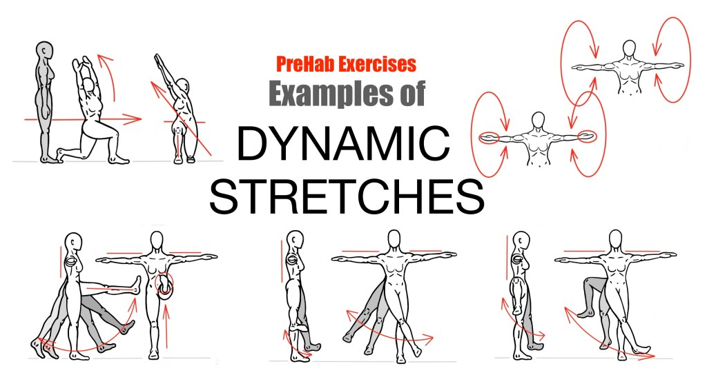 what is dynamic stretching? – fort collins personal trainer