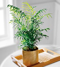 The FTD® Palm Plant