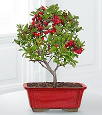 Berry Bright Holiday Bonsai
