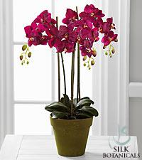 Jane Seymour Silk Botanicals Plum Phalaenopsis Orchid Plant