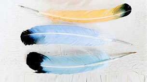 feather-pen