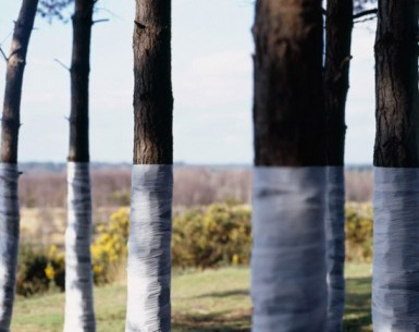 zander-olsen_tree-line_008