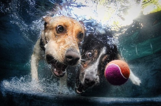 diving-dogs-photography4