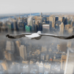 Above the World from Birds Perspective9