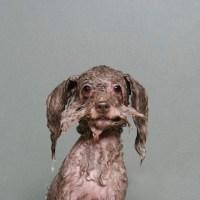 Wet Dogs Funny Series  Fubiz Media