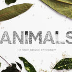 Creative Black and White Animal Alphabet-29
