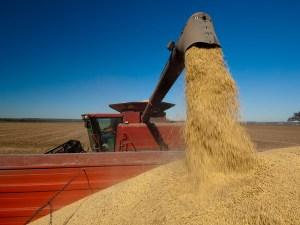 Biodiesel soybean feedstock