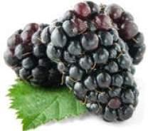 Resultado de imagen para la mora organica felicidad salud frutas