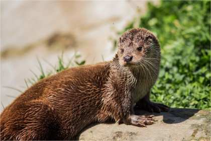 10 Otter Keith Vincent