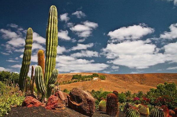 Oasis Park Fuerteventura  Parco Zoologicogiardino