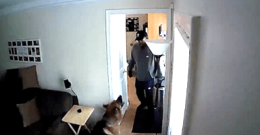 ID #19-141 German Shepherd Confronts Alleged Burglar