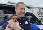 Stolen van with About 25 to 30 Rescue Dogs Recovered in Oakland
