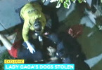 Lady Gaga's Dog Walker Shot and Dogs Stolen in Robbery