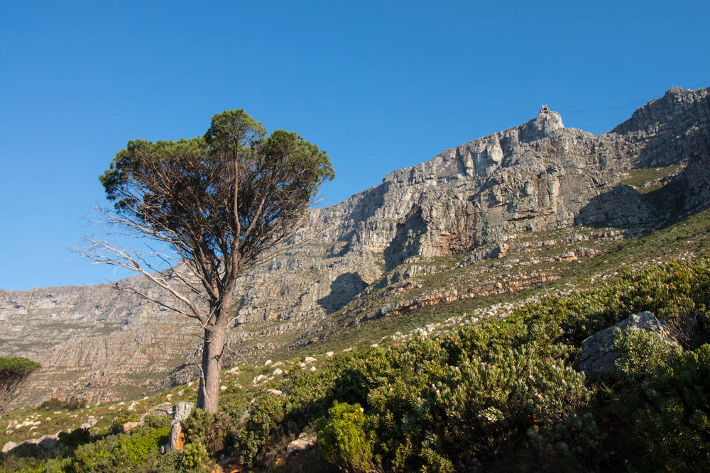 Vista da Table mountain